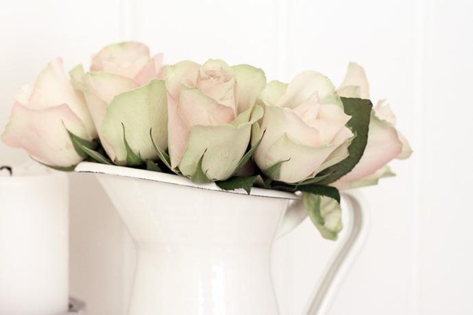 nydelig roser til en billig penge2