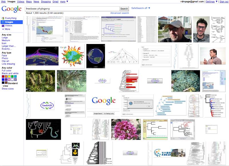 treebasephylogeny.png