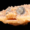 Halieutichthys