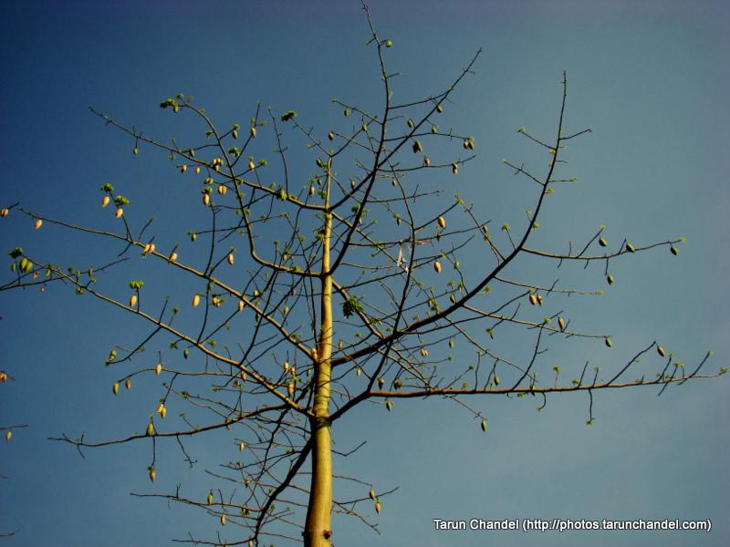 Dry tree Nashik Trip 2009, Tarun Chandel Photoblog