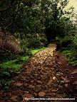 Nasik Jungle Path, Tarun Chandel Photoblog