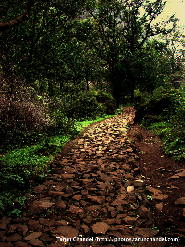 Nasik Jungle Path, Tarun Chandel Photoblog