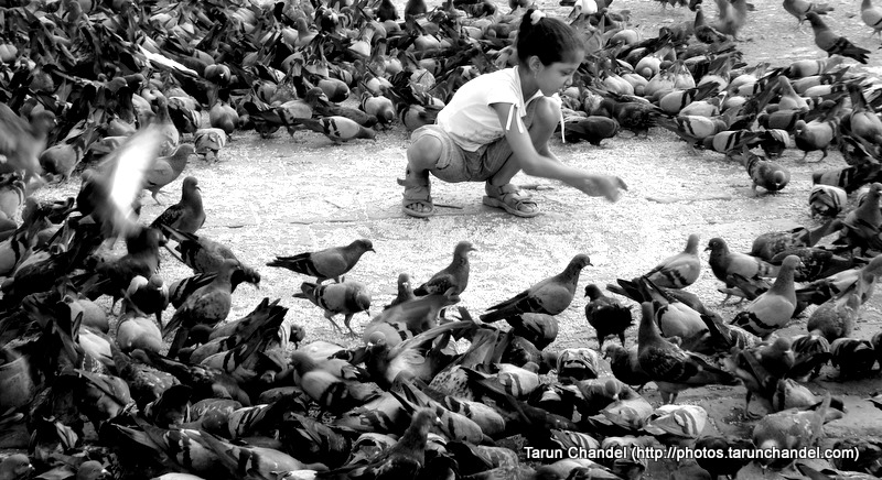 Girl With Pigeons Mumbai, Tarun Chandel Photoblog
