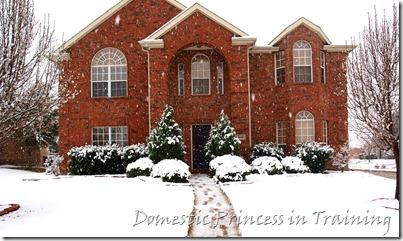 snow, vdaycards, primrose 2.10 073
