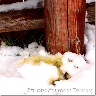 snow, vdaycards, primrose 2.10 133