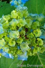 Colour harmony similar green blue2