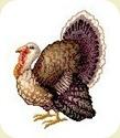 TurkeyLive