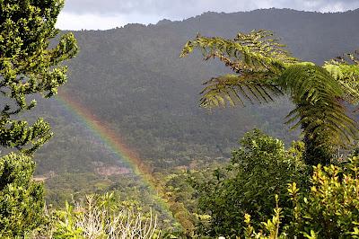 rainbow over the rainforest