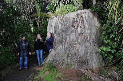 Kauri tree stump and three tourists