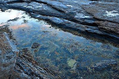 sunset in tidal pool