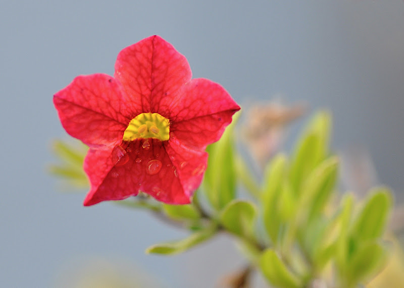 tiny red-orange flower blossom