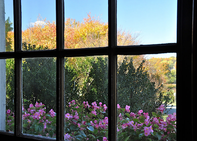 fall colors through a window