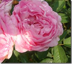 DSC05183-pinkbaby copy
