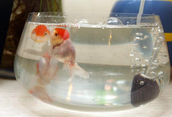养鱼可真不容易 - bldr - Georges blog