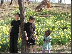 Daffodil gardens 036