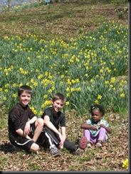 Daffodil gardens 016