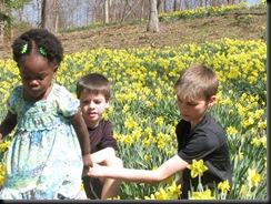 Daffodil gardens 024
