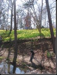 Daffodil gardens 070
