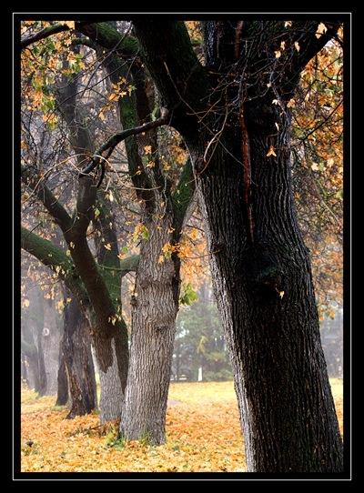 foggy fall 3