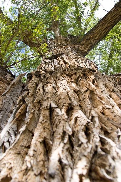 up-the-tree