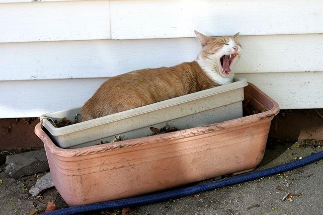 goofball cat
