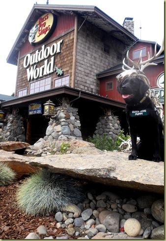 Another photo of Sheba sitting outside the Bass Pro Shop on a rock.
