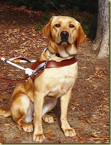 A photo of Wendy in harness with fall leaves in the background.