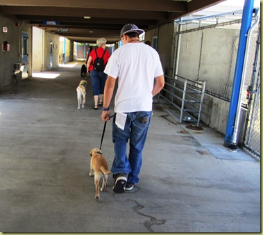 Tyler takes Vienna for her first walk in the kennels at GDB.  Not bad, huh?