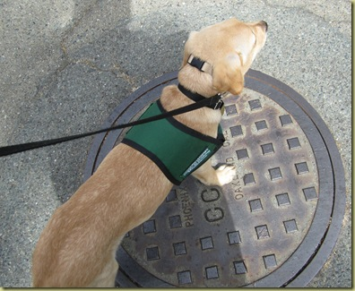 Vienna as she stands on the metal manhole cover.