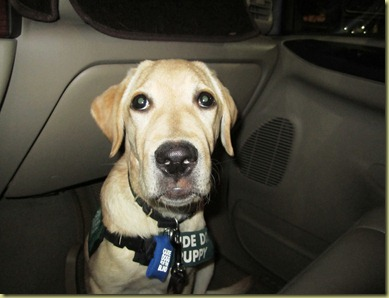 Another photo of Vienna sitting on the floor board of the turvk being a very calm little girl.