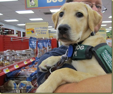 Vienna in my husband's arms at Petco.