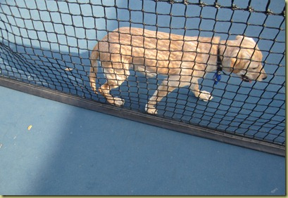 Vienna as she finally discovers she must go around the tennis net!