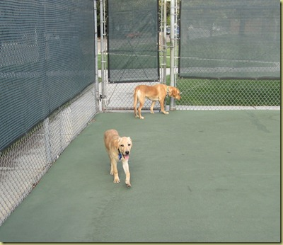 Vienna and Wendy just walking around the tennis court.  They were pretty tired!