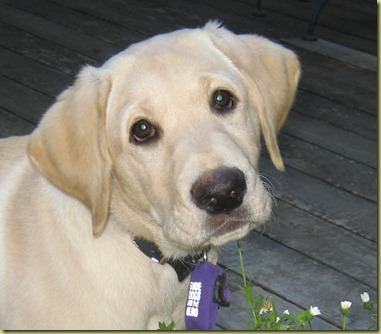 A close up of Reyna when she was a little puppy.