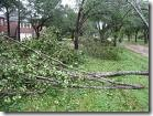 downed limbs