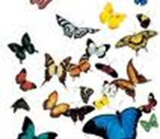 butterflies bunch