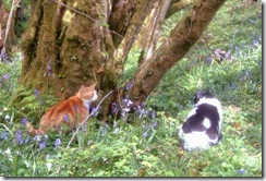 cats in woods 2