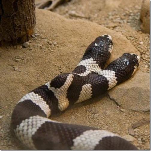 snake (1)