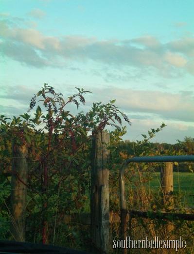 fence rail baxter ayla