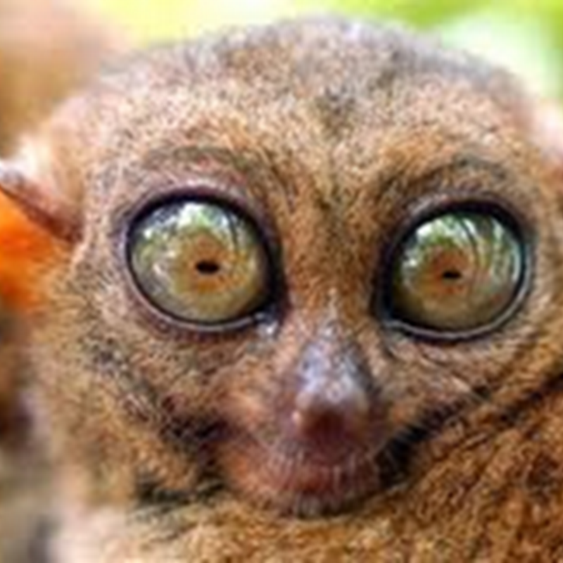 Terjojol biji mata biru ku ini ..