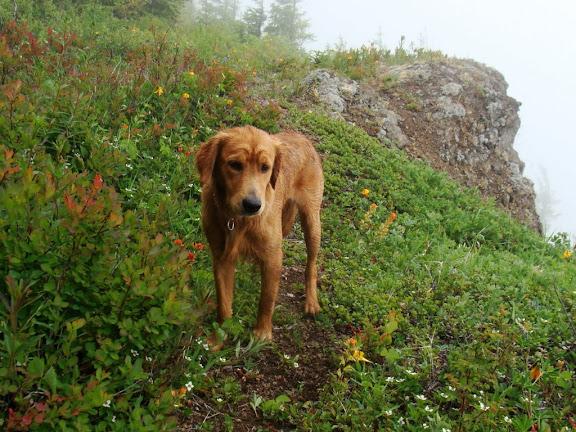 Copper on the Ridge