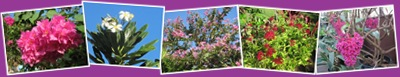 View Maui Flowers