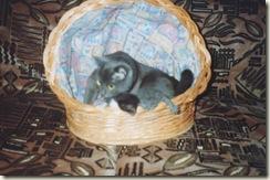 семья)) кошкина