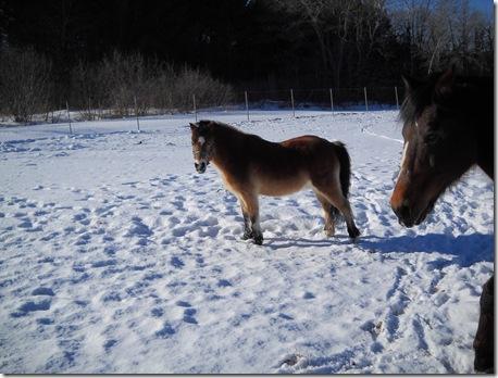 horses outside 023