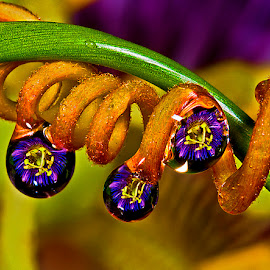 Drops with passion flower by David Winchester - Nature Up Close Natural Waterdrops