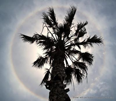 гало, малое гало на фоне пальмы