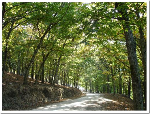 Caminho na bosque
