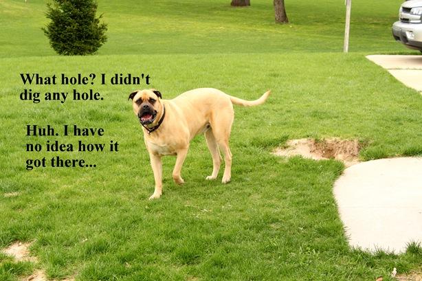 bullmastiff hole
