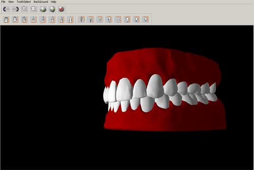 3d dental anatomy