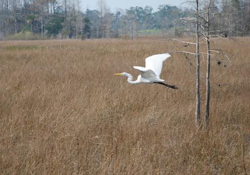 Florida, bird